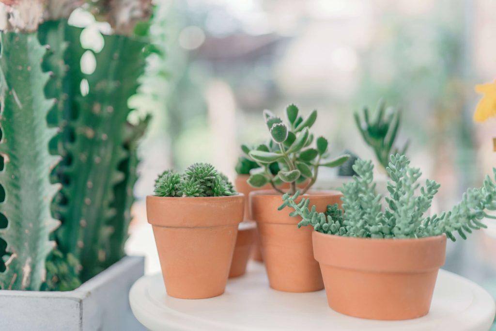 様々な観葉植物