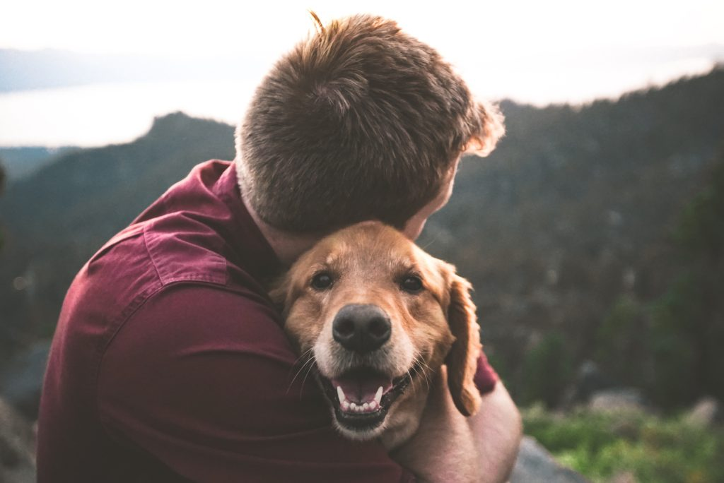 Animal therapy is an effective way to feel happier.