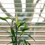 greening the office